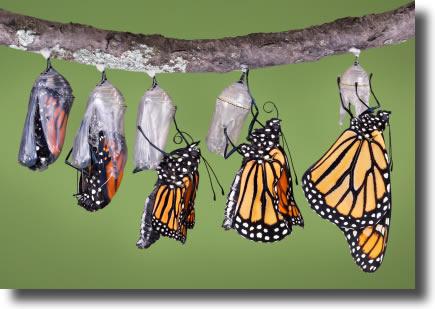 wpid-butterfly